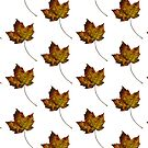 Maple Leaf in Fall by Kendra Kantor