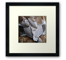 Tail Feathers Framed Print