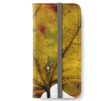 Maple Leaf in Fall Close Up iPhone Wallet/Case/Skin