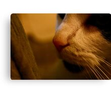 Everybody Wants to be a Cat Canvas Print