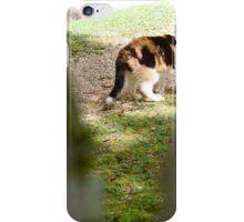 Stray Cat Strut  iPhone Case/Skin