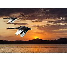 Two Swans at Dawn. Ocean Sunrise with Water Reflections Photographic Print