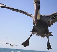 Pelican Crash Landing by Jackie Bell