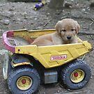 Ramses Tonka Truck Fun by goldnzrule