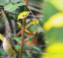 Birdie in a Tree Sticker