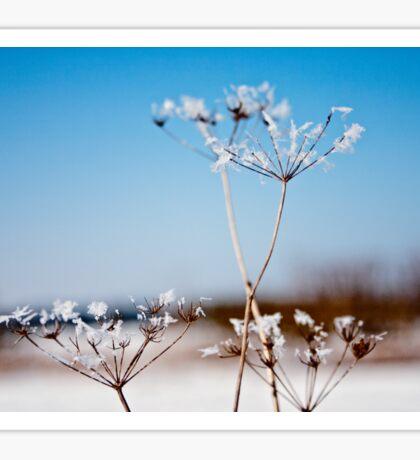 Queen Annes Lace Snow flowers Sticker