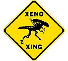 Xeno Xing Photographic Print
