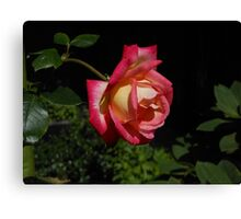 Sunkissed Rose in Profile Canvas Print