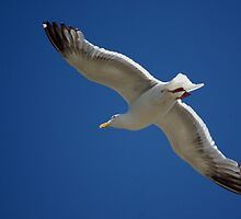 Gliding the Pacific by Sheri Bawtinheimer
