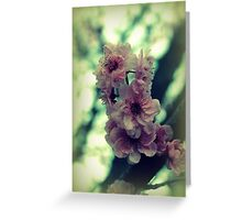 Cherry Tree Blossoms Greeting Card