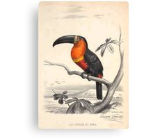Ariel Toucan Canvas Print