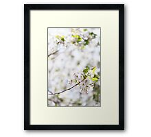 White cherry blossom flowers art photo print Framed Print