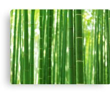 Bamboo forest culms closeup abstract background art photo print Canvas Print