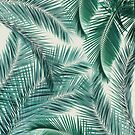 Palms by Vin  Zzep