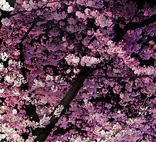 Sakura cherry blossom at night art photo print by ArtNudePhotos