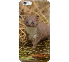 Weasel (Mustela nivalis) - II iPhone Case/Skin