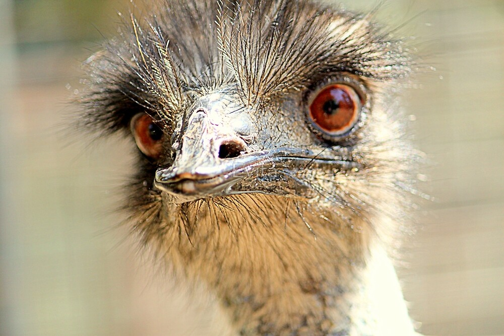 Yes... It Is I  Emu by Evita