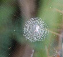Walking in a Spider Web Sticker