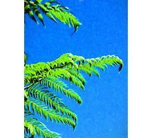 Tree Fern against a Blue Sky Photographic Print