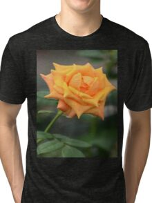 Yellow Rose With Tint of Peach Tri-blend T-Shirt