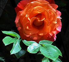 Leaf me alone! Glowing Miniature Rose by BlueMoonRose