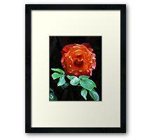 Leaf me alone! Glowing Miniature Rose Framed Print