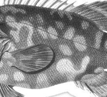 Atlantic Wreck-Fish Sticker