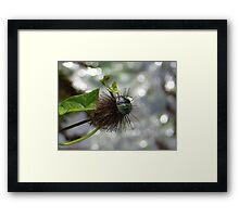 Green Stink Bug Framed Print