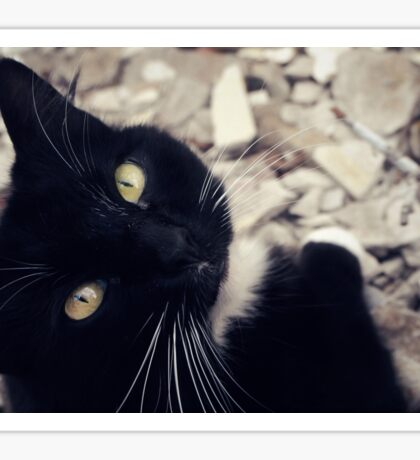 Portrait of a Cat: Socks Sticker