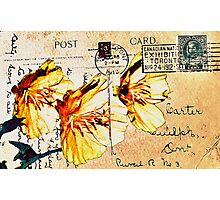 Himalayn Dandelion on Vintage 1912 Postcard Photographic Print