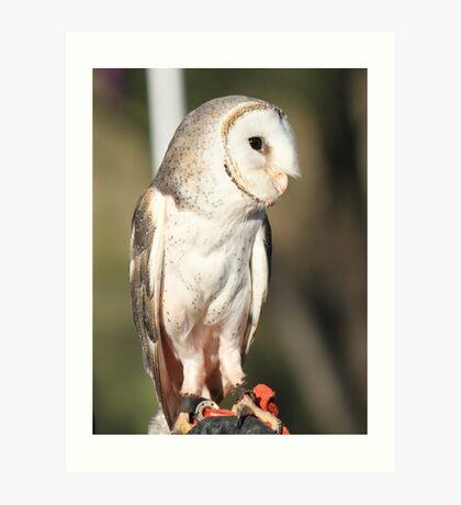 Barn Owl in all his Glory Art Print