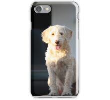The labradoodle iPhone Case/Skin