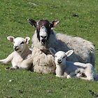 Ewe with her lambs by Alexandra Lavizzari