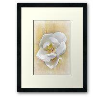 Sweet Southern Magnolia Framed Print