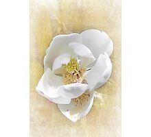 Sweet Southern Magnolia Photographic Print