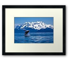Whale breach Framed Print