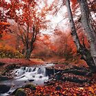 The charm of late autumn by Vlad Sokolovsky