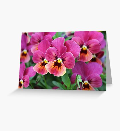 European Garden Pink Pansy Flower Greeting Card
