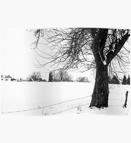 Bare Tree In Snow Poster