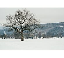 Glorious Winter Tree Photographic Print
