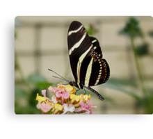 Zebra Longwing Butterfly on Lantana Canvas Print