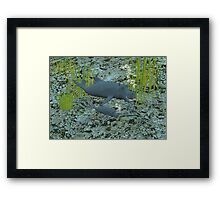 Whalippos Framed Print