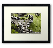 Withered Heart - Nature Photography Framed Print