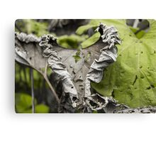 Withered Heart - Nature Photography Canvas Print