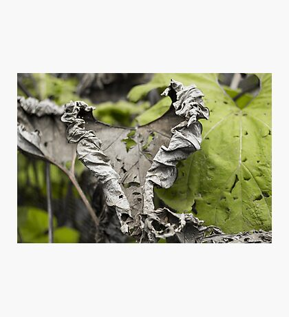 Withered Heart - Nature Photography Photographic Print