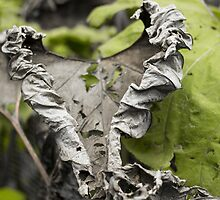 Withered Heart - Nature Photography by JuliaRokicka