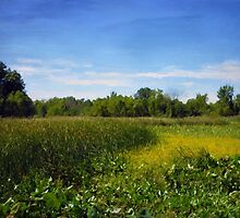 Sheldon Marsh - Summer Meadow 2 by Shawna Rowe