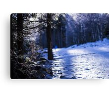 Snowflakes and Frozen Plants - Travel Photography Canvas Print