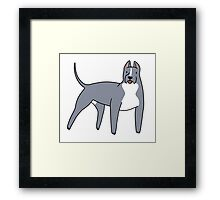 Pitbull Framed Print