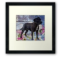 Staffy old painted wood  Framed Print
